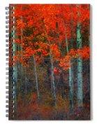 Orange Glory Spiral Notebook