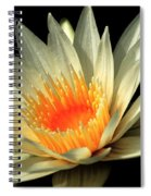 Orange Glow   # Spiral Notebook