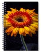 Orange Graphic Mum Spiral Notebook