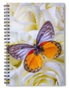 Orange Gray Butterfly Spiral Notebook