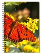 Orange Gulf Fritillary Spiral Notebook