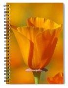 Orange Harmony Spiral Notebook