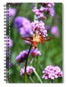 Orange Hummingbird Moth Spiral Notebook