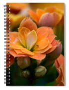 Orange Kalanchoe With Company Spiral Notebook