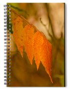 Orange Leaves Of Fall Spiral Notebook