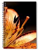 Orange Lily Spiral Notebook