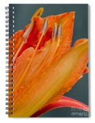 Orange Lily Spiral Notebook