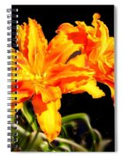 Orange Lily Twins Spiral Notebook