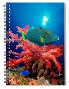 Orange-lined Triggerfish Balistapus Spiral Notebook