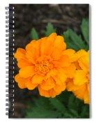 Orange Marigolds   # Spiral Notebook