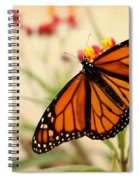 Orange Mariposa Spiral Notebook
