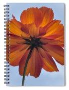 Orange On Blue Spiral Notebook