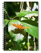 Orange On Green Spiral Notebook
