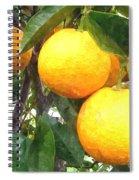 Orange On Tree Spiral Notebook
