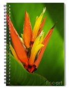 Orange Pocket Fold Spiral Notebook