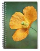 Orange Pop Spiral Notebook