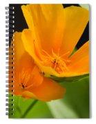 Orange Poppies Spiral Notebook