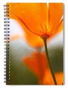 Orange Poppy In Sunlight Spiral Notebook
