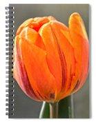 Orange Red Tulip Square Spiral Notebook