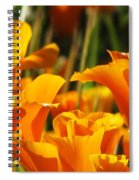 Orange Rising Spiral Notebook