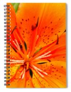 Orange Slices Spiral Notebook