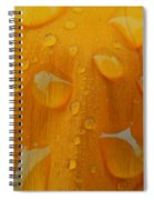 Orange Splash Spiral Notebook