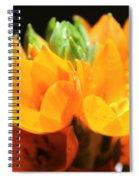 Orange Star Spiral Notebook