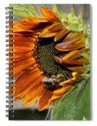 Orange Sunflower And Bee Spiral Notebook