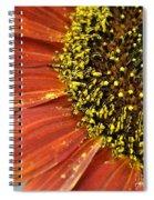 Orange Sunflower Close Up Spiral Notebook