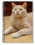 Orange Tabby Cat Spiral Notebook