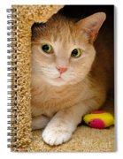 Orange Tabby Cat In Cat Condo Spiral Notebook