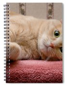 Orange Tabby Cat Lying Down Spiral Notebook