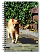 Orange Tabby Taking A Walk Spiral Notebook