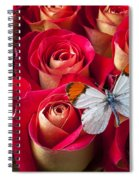 Orange Tip Butterfly Spiral Notebook
