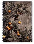 Orange Tree On Rustic Background Spiral Notebook