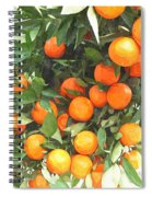 Orange Trees With Fruits On Plantation Spiral Notebook