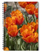 Orange Tulips  Spiral Notebook
