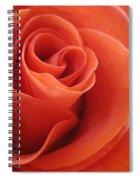 Orange Twist Rose 3 Spiral Notebook