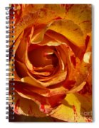 Orange Variegated Rose Spiral Notebook