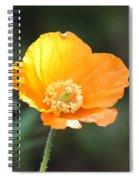 Orange Welsh Poppy Spiral Notebook