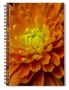 Orange Yellow Mum Spiral Notebook