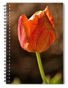 Orange/yellow Tulip Spiral Notebook