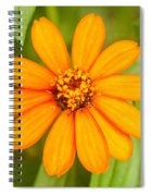 Orange Zenia Spiral Notebook