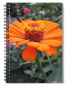 Orange Zinnia Spiral Notebook
