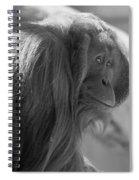 Orangutan Black And White Spiral Notebook