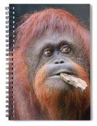 Orangutan Portrait Spiral Notebook