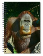 Orangutan Scratches With Stick Spiral Notebook