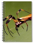 Orb Weaver - Coastal Spider Spiral Notebook