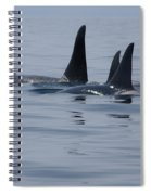 Orca Family Spiral Notebook