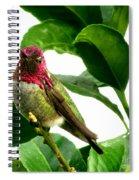 Orchard Friend Spiral Notebook